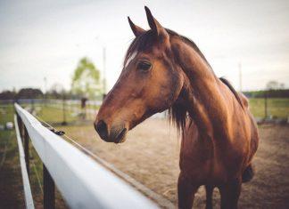 Сънища с коне