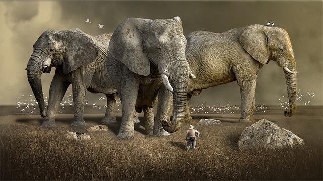 Сънища през трети триместър - Големи животни и предмети