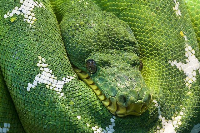 Змии в сънищата - различни асоциации