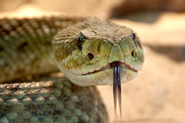 Повтарящи се сънища със змии