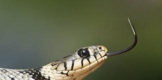 Змиите в сънищата