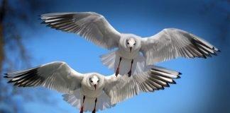 Сънища с птици
