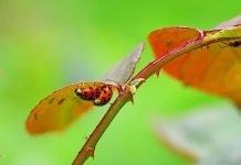 Сънища с насекоми и буболечки