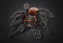 Сънища с паяци