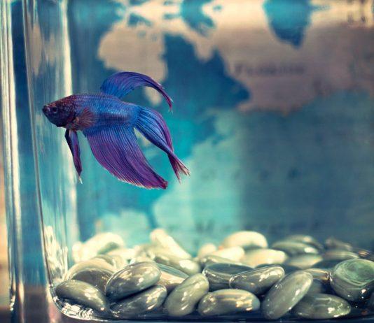 Сънища с риби