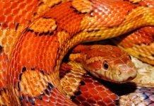 Сънища със змии