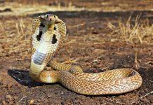 Ухапано от змия