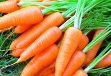 Морков Daucus carota L. subsp. sativus (Hoffm.) Arcang.