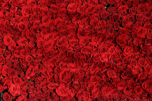 Червено в сънищата