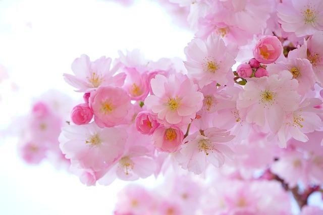 Розово в сънищата