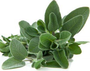 Градински чай Salvia Officinalis