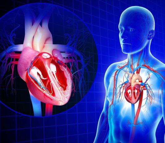 Повишаване тонуса на вътрешните органи
