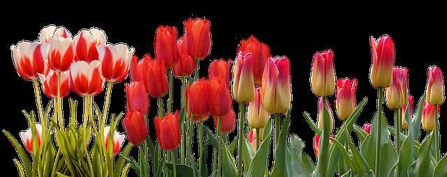 Цветовата терапия