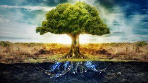 Елемент дърво