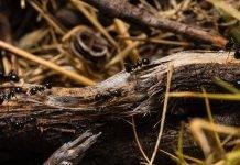 Мравките - как да ги изгоним