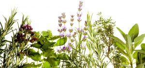 Приложения на билките, за които може би не знаете