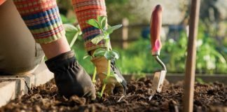 Зеленчуци - внимавайте за пръстта