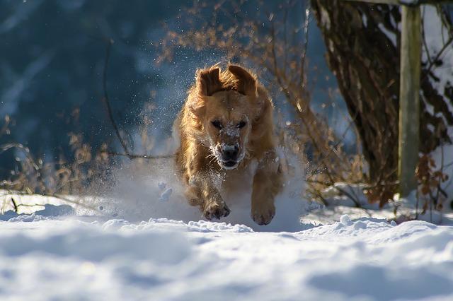 Бягащо куче