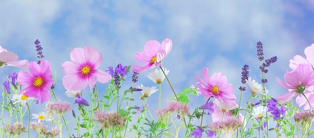 Съновник Баба Ванга - Цветя