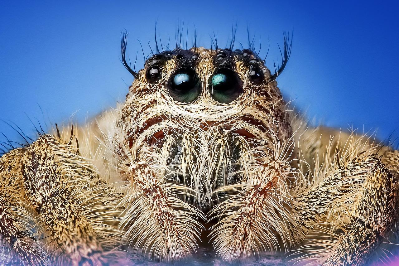 Паяците са древни - сънища с паяци