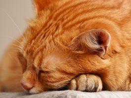 Спящи животни