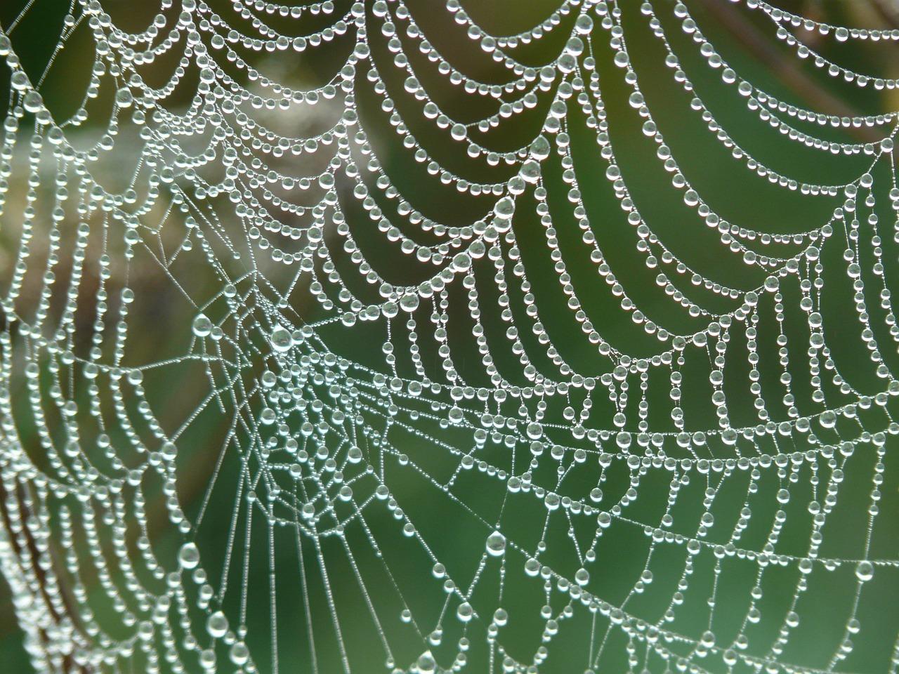 Паяците са древни - паяжина