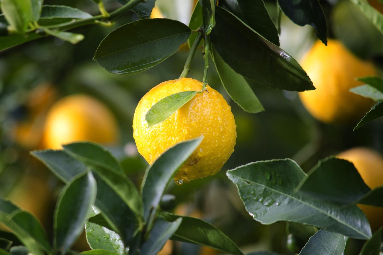 Лимони и лук прочистват кръвта - Лимон