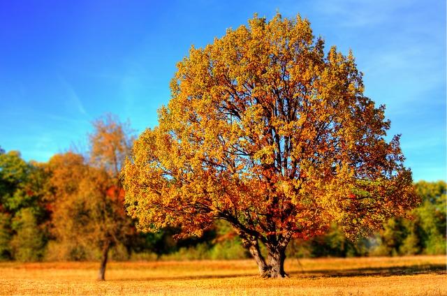 Как да засилим имунитета си през есента