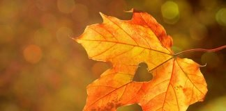 Засилване на имунитета през есента