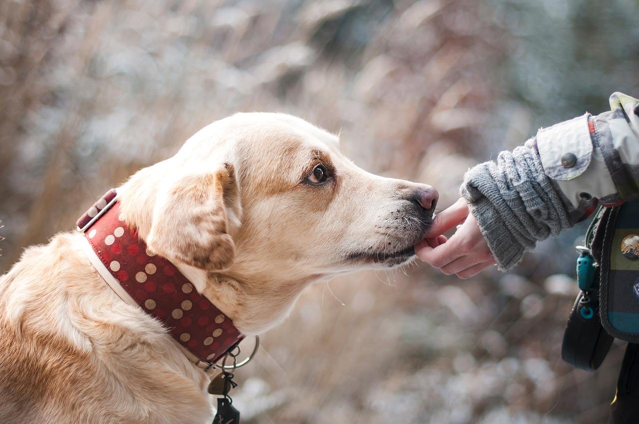 Кучетата ни пазят здрави