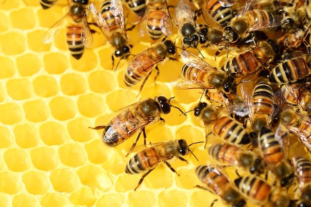 Пчелата помогнала за спасяването на света