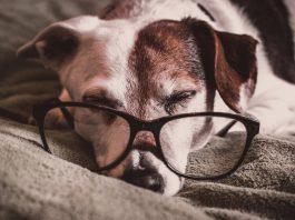 Какво сънуват кучетата