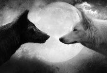 Кое е духовното ви животно според зодията