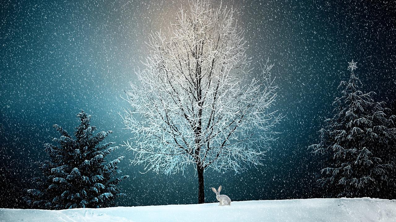 Астрологична прогноза за Декември месец