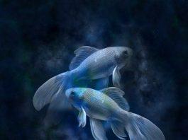 Всичко за зодия Риби