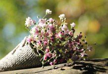 Магически настойки укрепват здравето