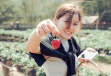 Японците възвеличават ягодите