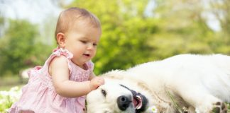 домашен люнимец и бебе