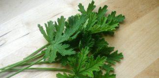 Индрише – лечебното растение