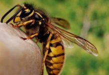 пчела - ухапване