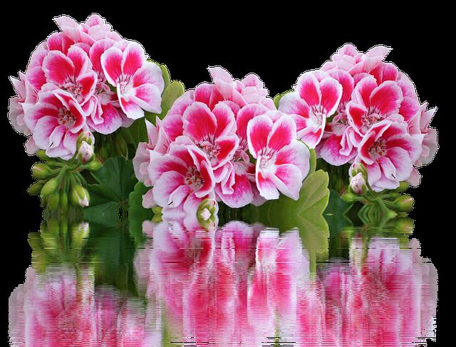 Стайни цветя които ви правят щастливи