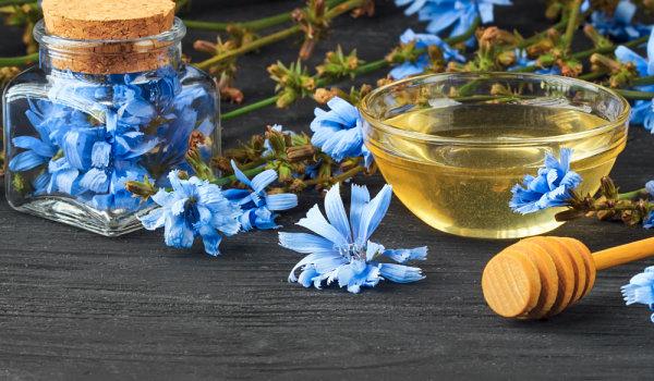 Цикория с мед при хранителни отравяния