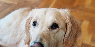 любов към кучета