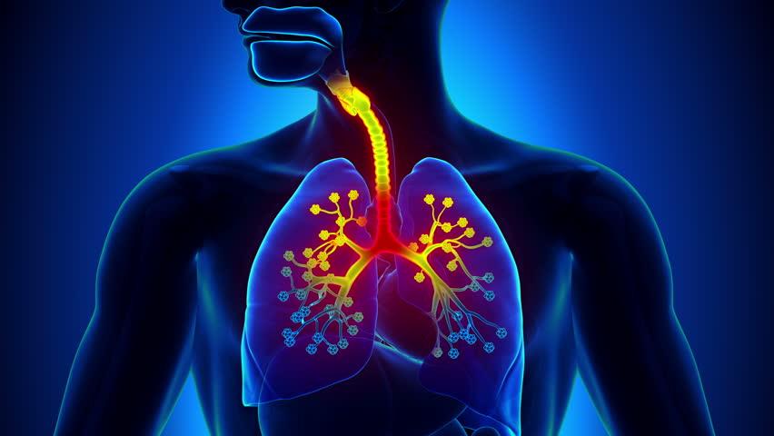 Здравето на вашата дихателна система