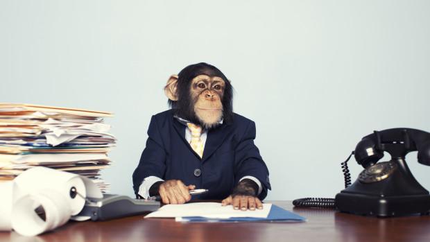 Хитростта ни помага в сложни ситуации - маймуна