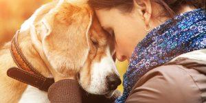 Как да изберем идеалната порода куче?