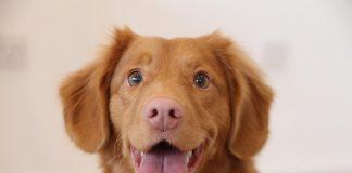 лек на кучешка тения