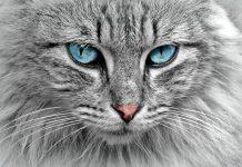 котките предпазват дома