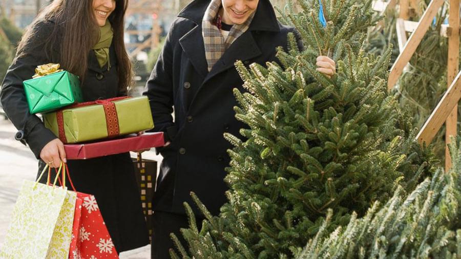 Каква елха да изберем за Коледа? - Отрязана елха