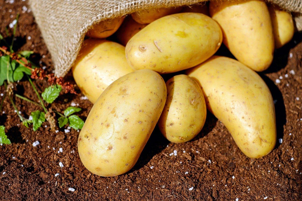 Картофите – най-засищащи и с изобилие от микроелементи
